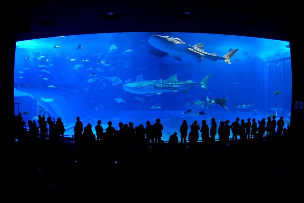 沖縄美ら海水族館(おきなわちゅらうみすいぞくかん)