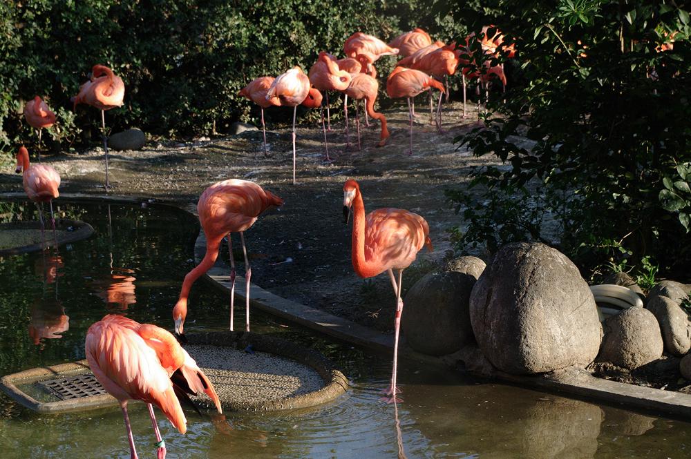 恩賜上野動物園(とうきょうとおんしうえのどうぶつえん)