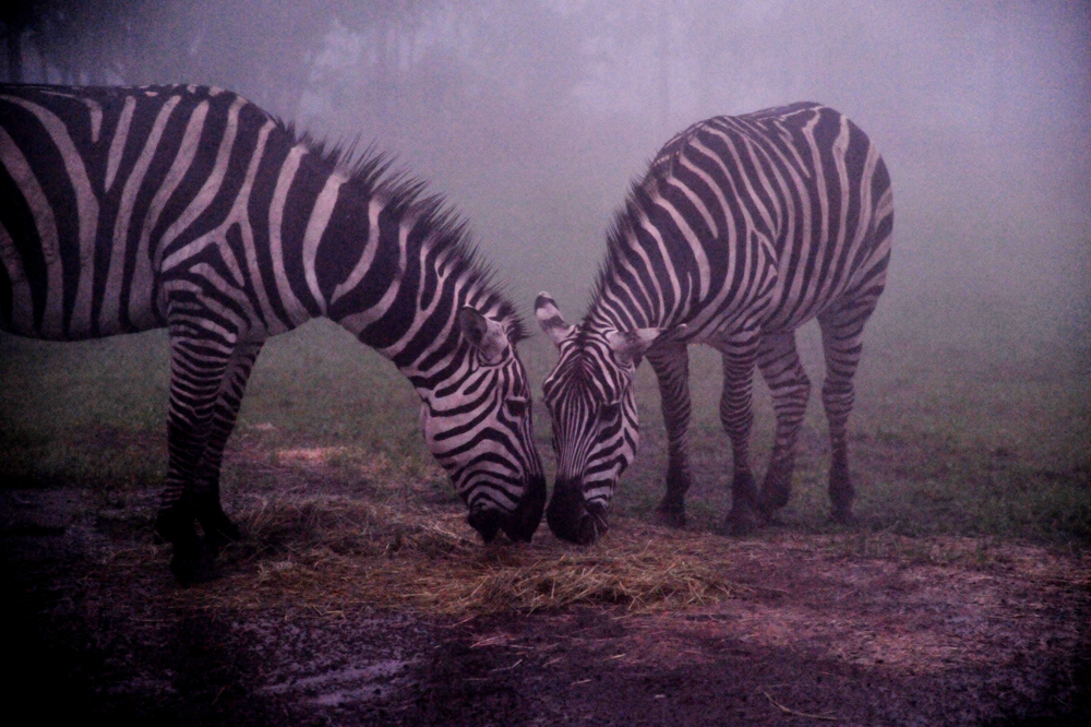 九州自然動物公園アフリカンサファリ