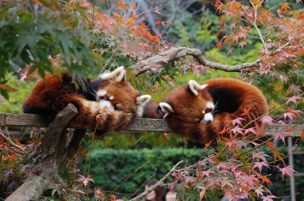市川市動植物園(いちかわしどうしょくぶつえん)